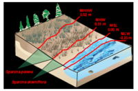 Marsh Analysis and Planning Tool Incorporating Tides and Elevations