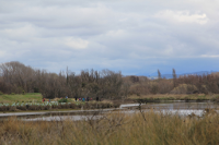 Waimakariri Land and Water Solutions Programme