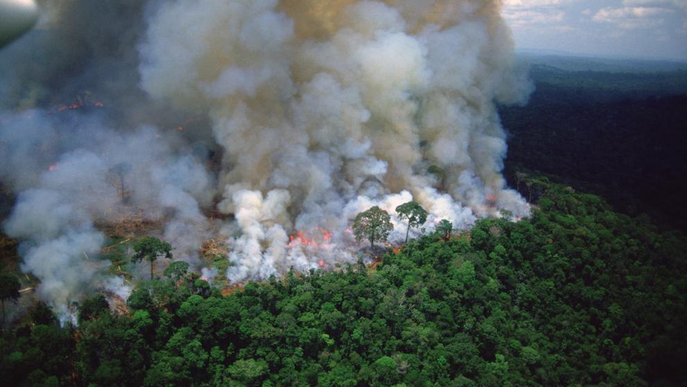 El sueño de Bolsonaro: destruir la Amazonia