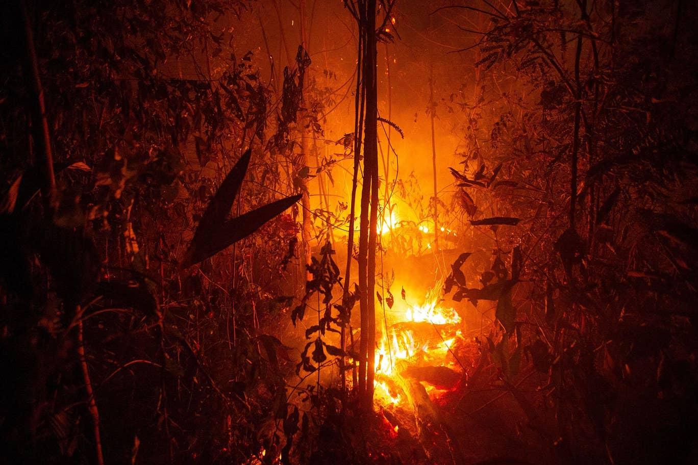 Forest Fire Destruction Of The Amazon Rainforest