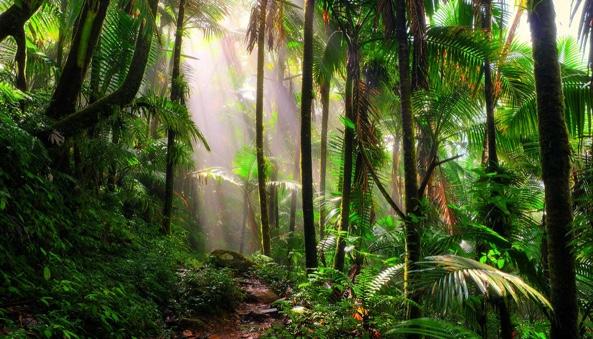 Tropical Rainforest Arcgis Storymaps