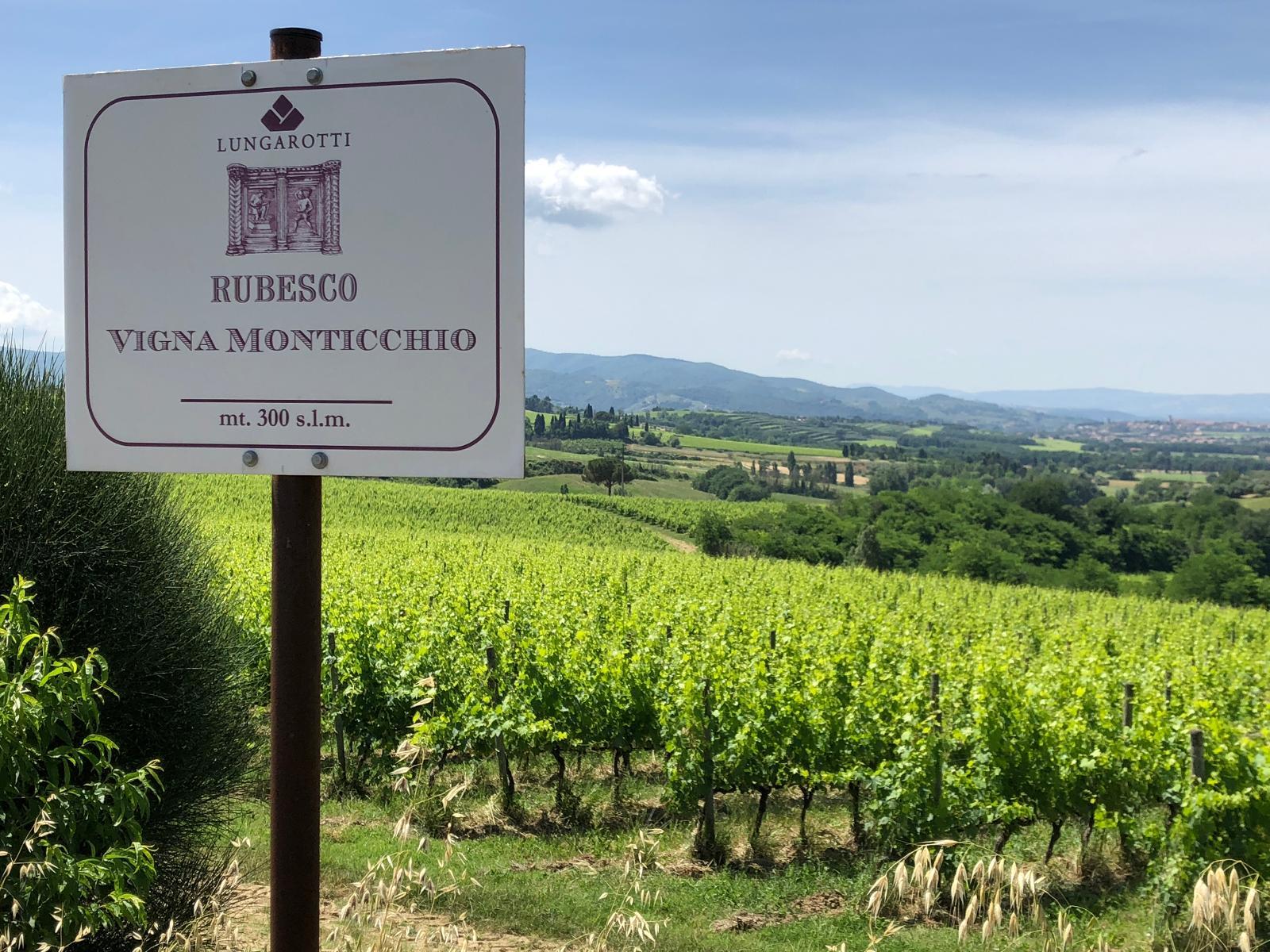 Lungarotti's vineyard