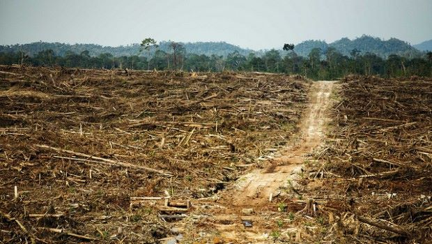 Αποτέλεσμα εικόνας για africa deforestation