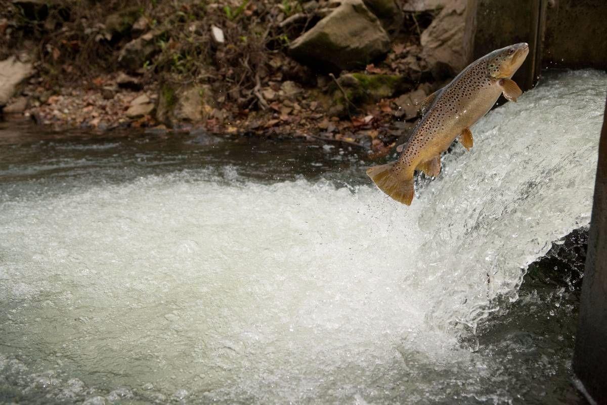 Missouri Trout Fishing