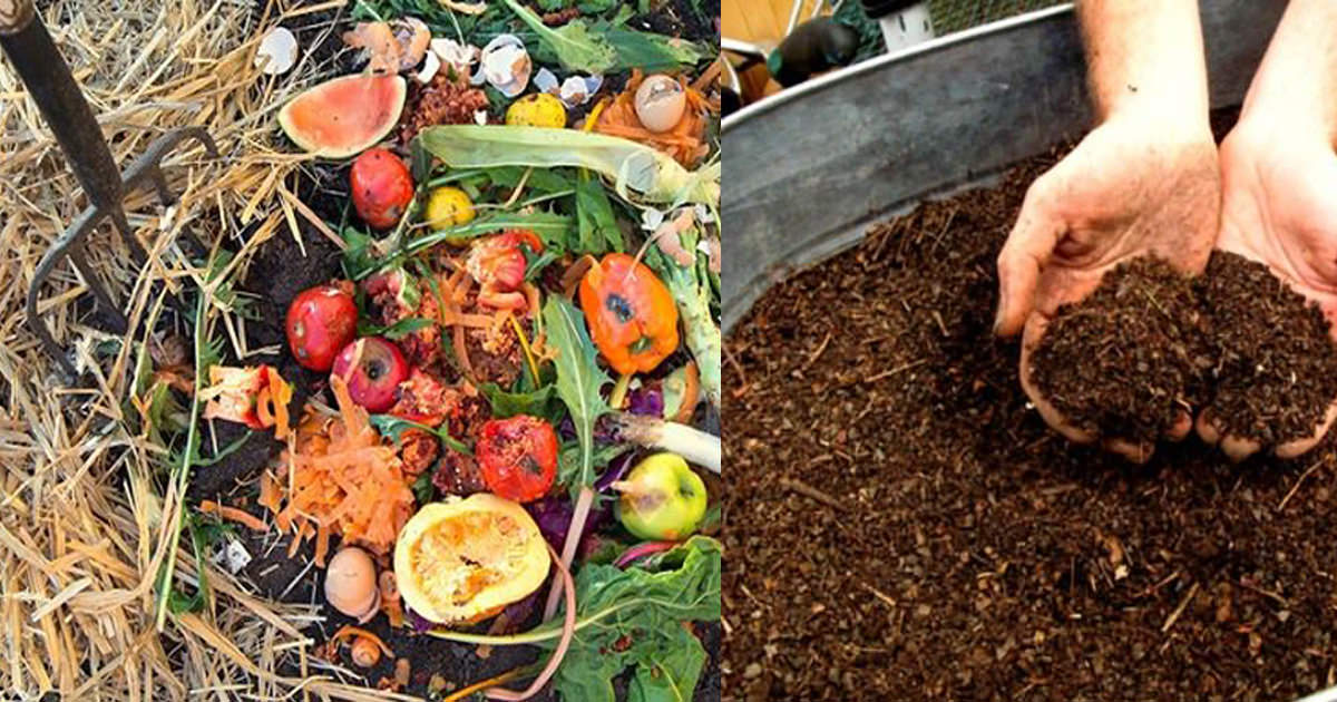 Composting And Palm Beach County S Implementation Arcgis Storymaps