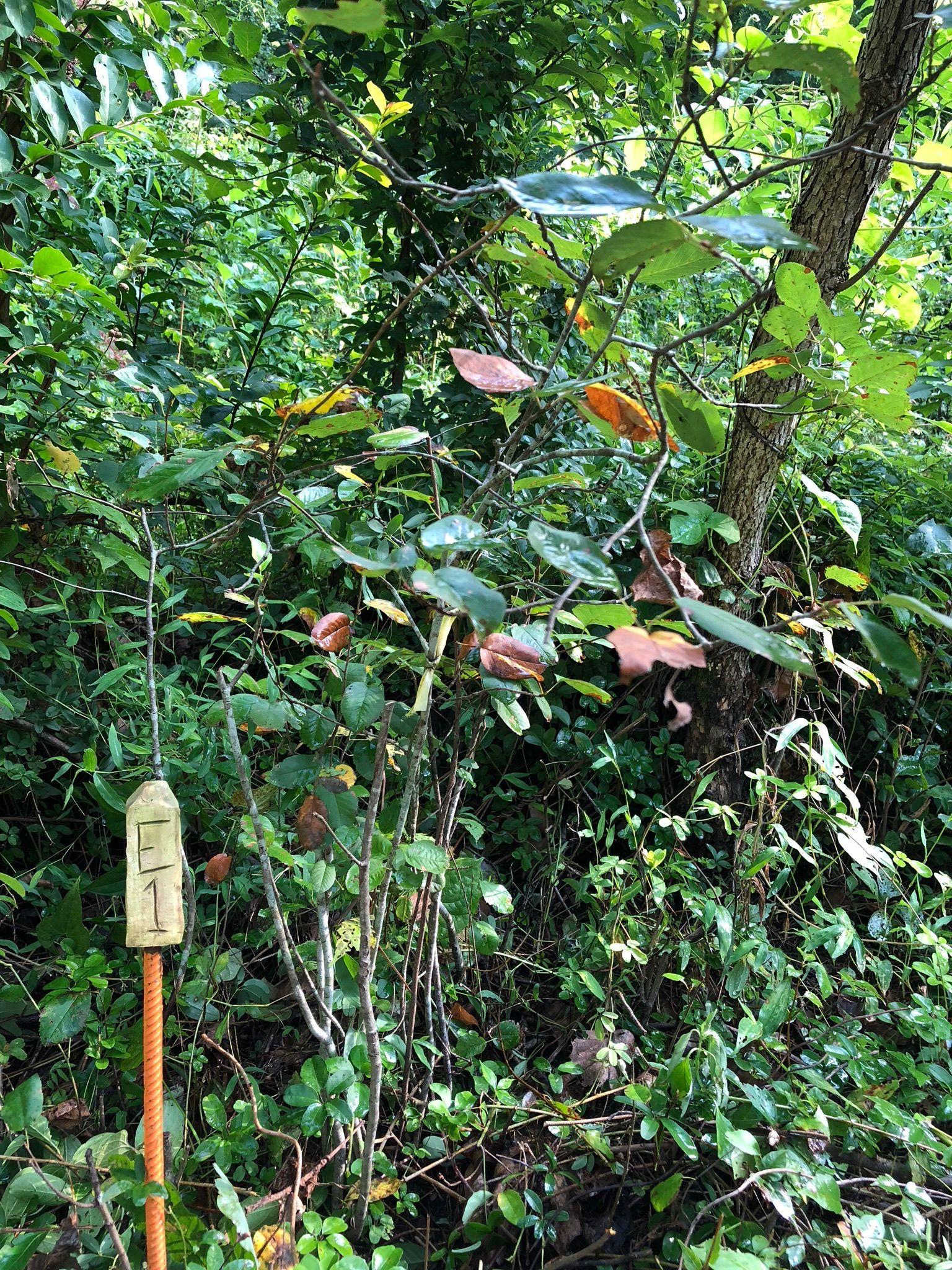 Sequatchie Valley Institute - Arboretum Trail